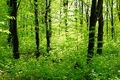 stock photo of nic  - inside of deep spring forest - JPG