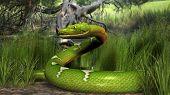 image of green tree python  - green python in jungle - JPG