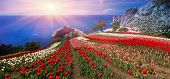 Sunrises And Sunsets In The Crimea Are Extremely Picturesque. On The Background Of Blue Sea Grow Bea poster
