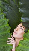 Beautiful Woman Face With Natural Nude Make-up On A Tropical Leaf Background. Healthy Life. Purity poster