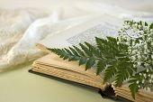 pic of negligee  - A single fern leaf lays on an opened vintage book with a green fern leaf and baby breath flowers with a lacy negligee in the background - JPG
