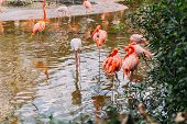 Flock Of Flamingos Walking In Pond In Zoological Park, Barcelona, Spain poster