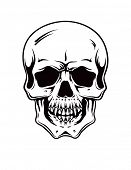 Cartoon Vector Skull . hand drawn