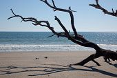 stock photo of driftwood  - Driftwood of a dead tree - JPG