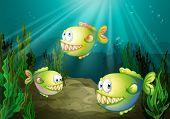 pic of piranha  - Illustration of the three piranhas under the sea with seaweeds  - JPG