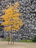 Autumn Tree In Prague poster