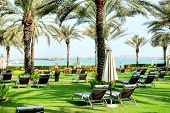 stock photo of lawn chair  - Sunbeds on the green lawn and palm tree shadows in luxury hotel Dubai UAE - JPG