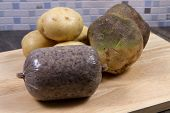 stock photo of haggis  - A traditional raw Scottish Haggis with potatoes and swede - JPG
