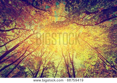Autumn, fall trees. Sun shining through colorful leaves. Vintage photograph style poster