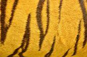 pic of tigress  - Close Up Of Beautiful Tiger Fur Texture - JPG