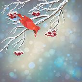 pic of rowan berry  - Vector snowy Christmas card with frozen Rowan tree branches - JPG