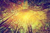 picture of tree leaves  - Autumn - JPG