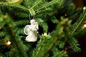 image of christmas angel  - Christmas angel on christmas tree branch lights hanging in a tree - JPG