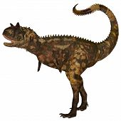 picture of carnivores  - Carnotaurus was a theropod carnivorous dinosaur that lived in Argentina in the Cretaceous Period - JPG