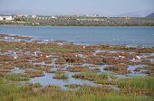 image of flamingo  - Flamingos on the lagoon  - JPG