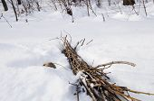 picture of bundle  - Photo of a brushwood that put together in a bundle - JPG