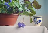 image of violets  - Flower a violet violet in a brown pot on the bedside table and a small ceramic vase near to it - JPG