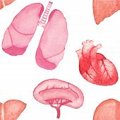 foto of internal organs  - Watercolor seamless pattern with realistic human internal organs on the white background - JPG