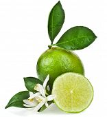 stock photo of lime-blossom  - Lime citrus fruit flowering close up isolated on white background - JPG