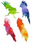 stock photo of mockingbird  - Parrot Silhouette - JPG