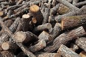 picture of firewood  - large pile of stacked firewood and disorganized - JPG