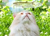 Cat, Probably Thinking About Food, With A Think Cloud Against A Green Background. Dreaming Cat.  Top poster