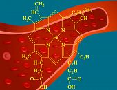 stock photo of hemoglobin  - Illustration of heme structure - JPG