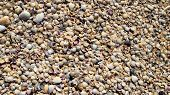 Sea Shells Seashells - Variety Of Sea Shells From Beach - Panoramic - With Large Scallop Shell. poster