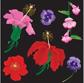 Set of Flowers bloom - hibiscus, violet, convolvulus - on black background