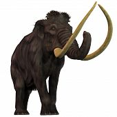 picture of gentle giant  - Woolly Mammoths are extinct herbivorous mammals that lived from the Pleistocene to the Holocene Periods - JPG