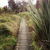 stock photo of marshlands  - Boardwalk in New Zealand landscape - JPG