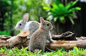stock photo of furry animal  - Two rabbits bunny in the garden - JPG