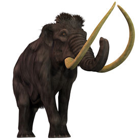 image of gentle giant  - Woolly Mammoths are extinct herbivorous mammals that lived from the Pleistocene to the Holocene Periods - JPG