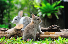 pic of zoo  - Two rabbits bunny in the garden - JPG