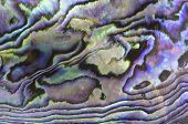image of mother-of-pearl  - the texture of the mother of pearl sea shell - JPG