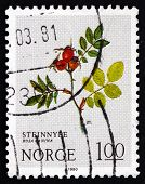 Postage Stamp Norway 1980 Dog Rose, Deciduous Shrub