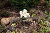 pic of gnome  - Close up of garden gnome - JPG