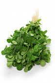 stock photo of fenugreek  - methi - JPG