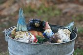 pic of gnome  - vintage galvanized bucket filled with garden gnomes