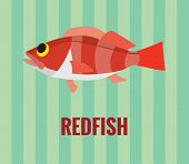 picture of redfish  - Vector resizable drawing of a deepwater redfish on green background - JPG