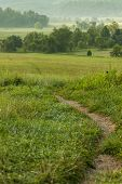 stock photo of cade  - A trail through a field - JPG