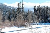 picture of blanket snow  - A snow blanket over Vallecito Creek in Vallecito, CO