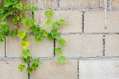 stock photo of hollow  - Hollow brick wall with green lvy Gourd - JPG
