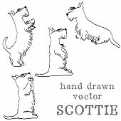 stock photo of scottish terrier  - Sketches of four cute Scottish terriers in different poses - JPG