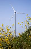 pic of wind wheel  - yellow rapeseed in foreground of wind turbine against blue sky - JPG