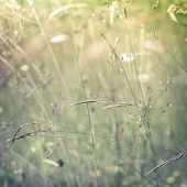 stock photo of wildflower  - Amazing sunrise at summer meadow with wildflowers. Nature floral background in vintage style ** Note: Shallow depth of field - JPG