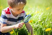 pic of fascinating  - Young boy exploring nature in a meadow with a magnifying glass looking at a ladybird - JPG