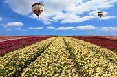 image of buttercup  -  In the sky flying scenic balloons - JPG