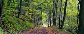 pic of dirt road  - Dirt road in the mixed forest  - JPG