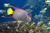 stock photo of undersea  - undersea world - JPG